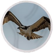 Osprey Flying Round Beach Towel