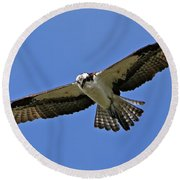 Osprey Glide Round Beach Towel