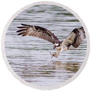 Round Beach Towel featuring the photograph Osprey Going For Breakfast by Lori Coleman