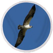 Round Beach Towel featuring the photograph Osprey In Blue Sky by William Selander