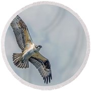 Osprey In Flight Round Beach Towel