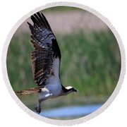 Round Beach Towel featuring the photograph Osprey In Flight by Gary Hall