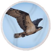 Osprey In Flight Round Beach Towel by Paul Freidlund