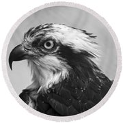 Osprey Monochrome Portrait Round Beach Towel