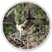 Osprey Nest Against Loblolly Round Beach Towel