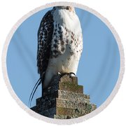 Red Shoulder Hawk On A Post Round Beach Towel