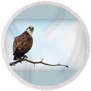 Round Beach Towel featuring the photograph Osprey Out On A Limb by AJ Schibig