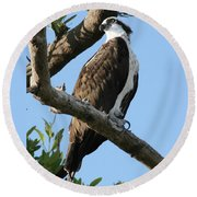 Round Beach Towel featuring the photograph Osprey - Perched by Jerry Battle