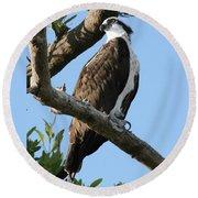 Osprey - Perched Round Beach Towel