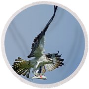 Osprey Success Round Beach Towel by Larry Nieland