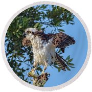 Osprey With Meal Round Beach Towel