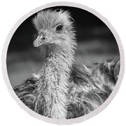 Ostrich Black And White Round Beach Towel