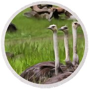 Ostriches In Africa Round Beach Towel by Dan Sproul