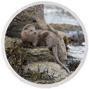 Otter Beside Loch Round Beach Towel