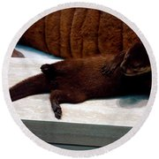 Otter Like It Round Beach Towel