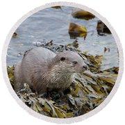 Otter On Seaweed Round Beach Towel