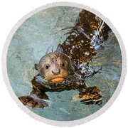 Otter Pup Round Beach Towel