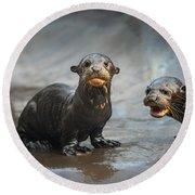 Otter Pup Pair Round Beach Towel by Jamie Pham