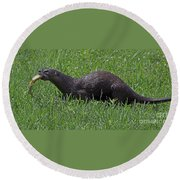 Otter With Fish Round Beach Towel