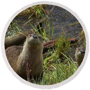 Otters Round Beach Towel by Steve Stuller