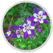 Our Gorgeous State Flower, Colorado Columbine  Round Beach Towel