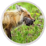 Out Foxed Round Beach Towel