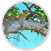 Out On A Limb Round Beach Towel