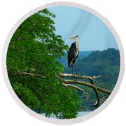 Out On A Limb Round Beach Towel by Donald C Morgan