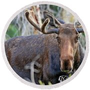 Round Beach Towel featuring the photograph Overlooking Moose by Scott Mahon