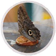 Round Beach Towel featuring the photograph Owl Butterfly-1 by Paul Gulliver