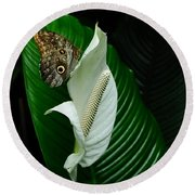 Owl Butterfly On Calla Lily Round Beach Towel