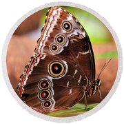 Owl Butterfly Portrait Round Beach Towel