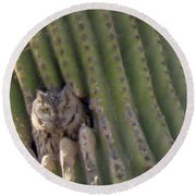 Owl In Cactus Burrow Round Beach Towel