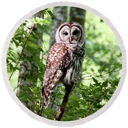 Owl In The Forest Round Beach Towel by Peggy Collins