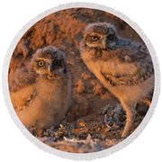 Owlet Siblings Round Beach Towel by Sue Cullumber