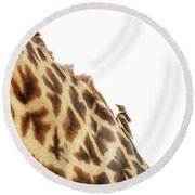 Oxpecker On Giraffe With Copy Space Round Beach Towel