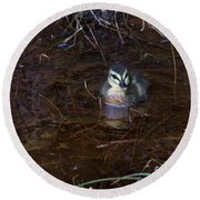 Round Beach Towel featuring the photograph Pacific Black Duckling by Miroslava Jurcik
