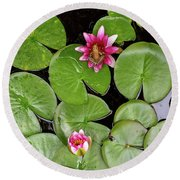 Pacific Tree Frog On Water Lily Flower Aerial View Round Beach Towel
