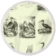 Page From The Pictorial Museum Of Animated Nature  Round Beach Towel by English School