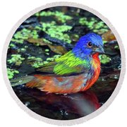 Painted Bunting After Bath Round Beach Towel