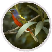 Painted Bunting Male Round Beach Towel by Phill Doherty
