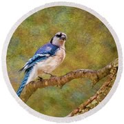 Painted Jay Round Beach Towel