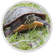 Round Beach Towel featuring the photograph Painted Turtle by Betty-Anne McDonald