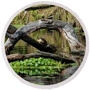 Round Beach Towel featuring the photograph Painted Turtles by Paul Mashburn