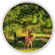 Pair Of Baby Deer Round Beach Towel