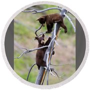 Pair Of Bear Cubs In A Tree Round Beach Towel