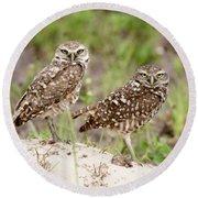 Pair Of Burrowing Owls Round Beach Towel