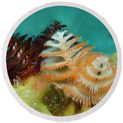 Pair Of Christmas Tree Worms Round Beach Towel by Jean Noren