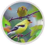 Pair Of Goldfinches Round Beach Towel