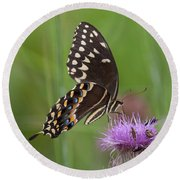 Palamedes Swallowtail And Friends Round Beach Towel